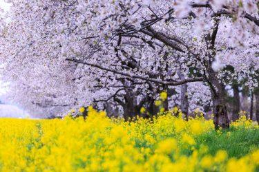 ロハスの春(機能訓練特化型)